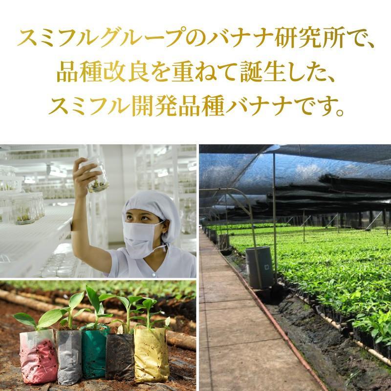 スミフル開発品種 バナナ キウイーナ 3パック 数量限定販売|sumifru|05