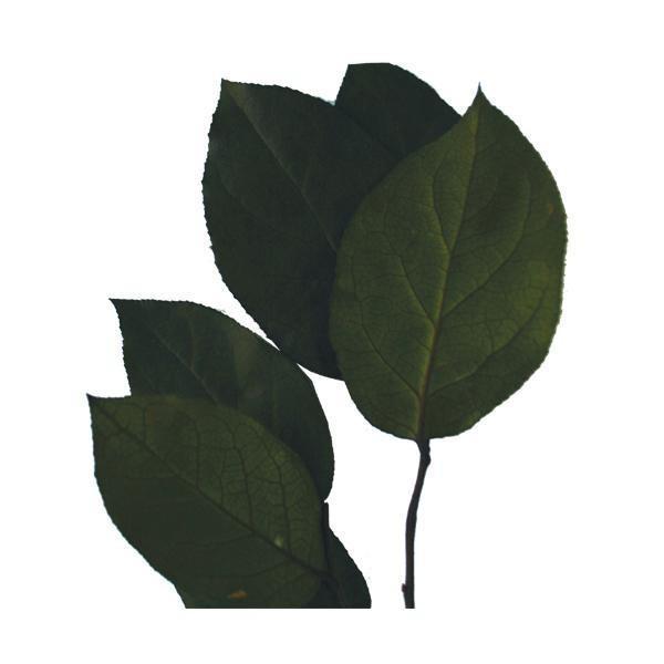 verdissimo ヴェルディッシモ レモンリーフ グリーンバルク 約1900g 33001(ガーデニング·花·植物·DIY)