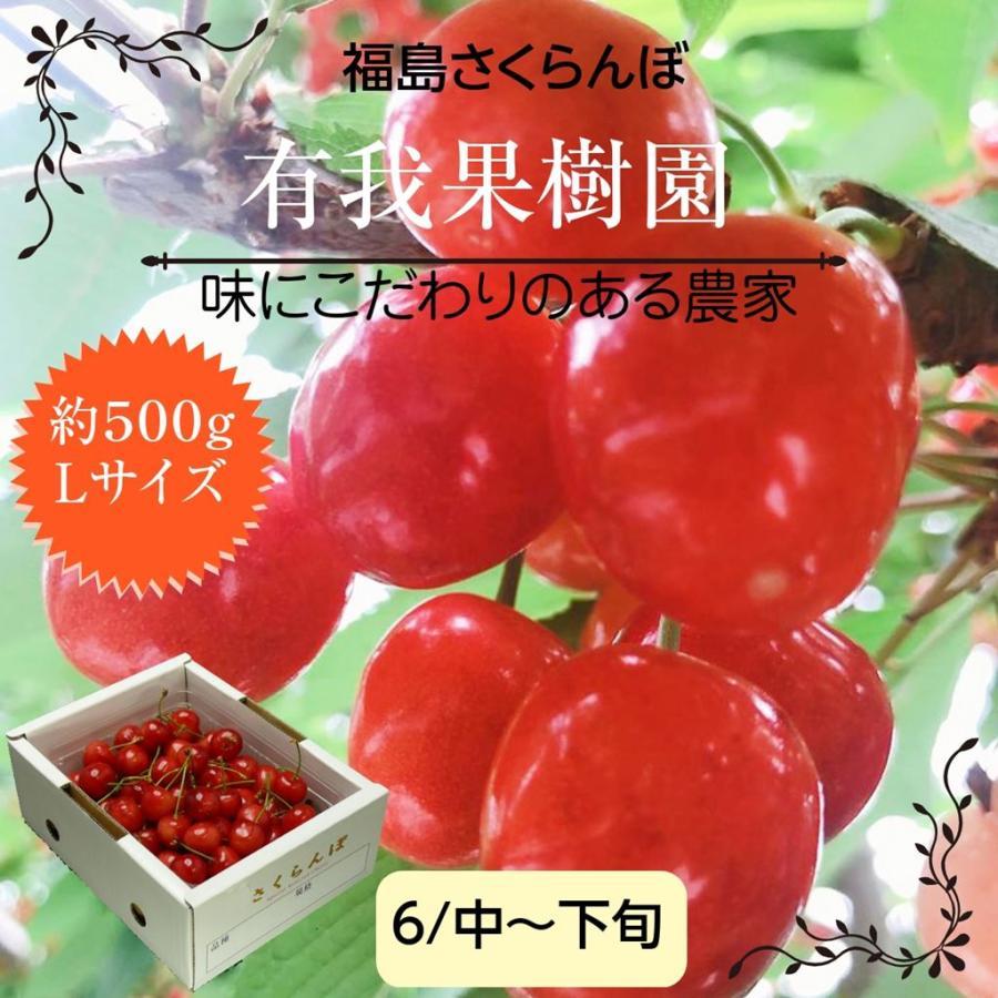 【有我果樹園】 さくらんぼ佐藤錦 500g L  福島県須賀川市|sweetjuicyparadise