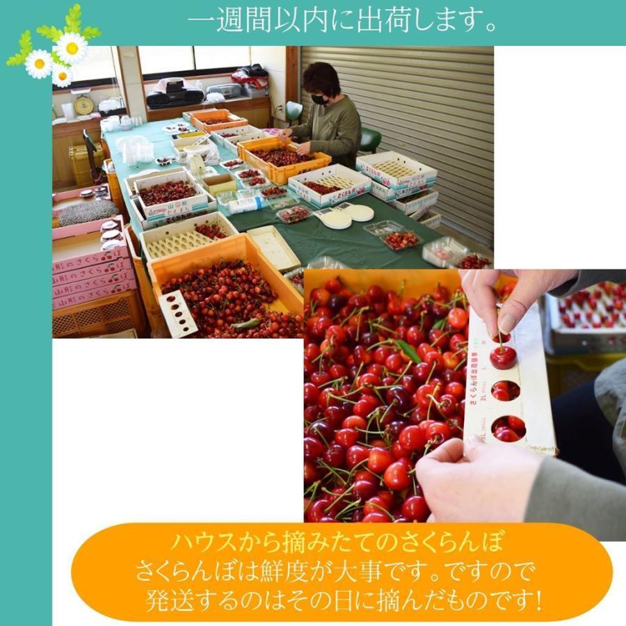 【一愛農園】さくらんぼ佐藤錦 山形県東根市 300g Lサイズ 贈答ギフト用|sweetjuicyparadise|09