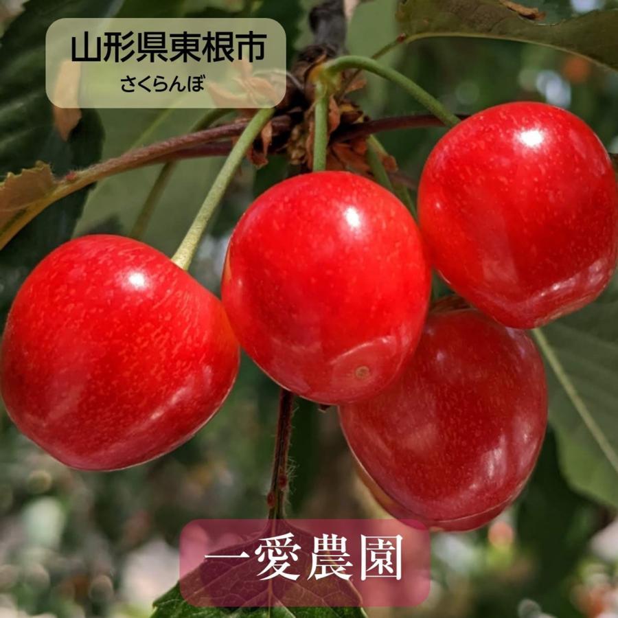 【一愛農園】佐藤錦さくらんぼ 贈答用 L 200g sweetjuicyparadise