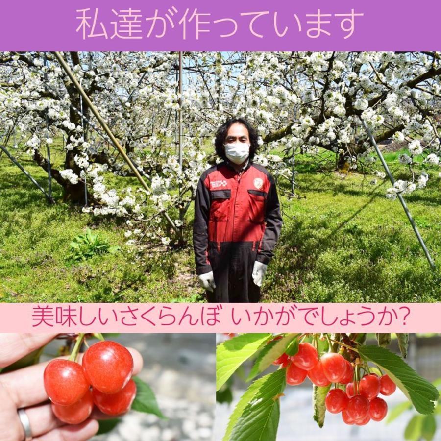 【一愛農園】佐藤錦さくらんぼ 贈答用 L 200g sweetjuicyparadise 09