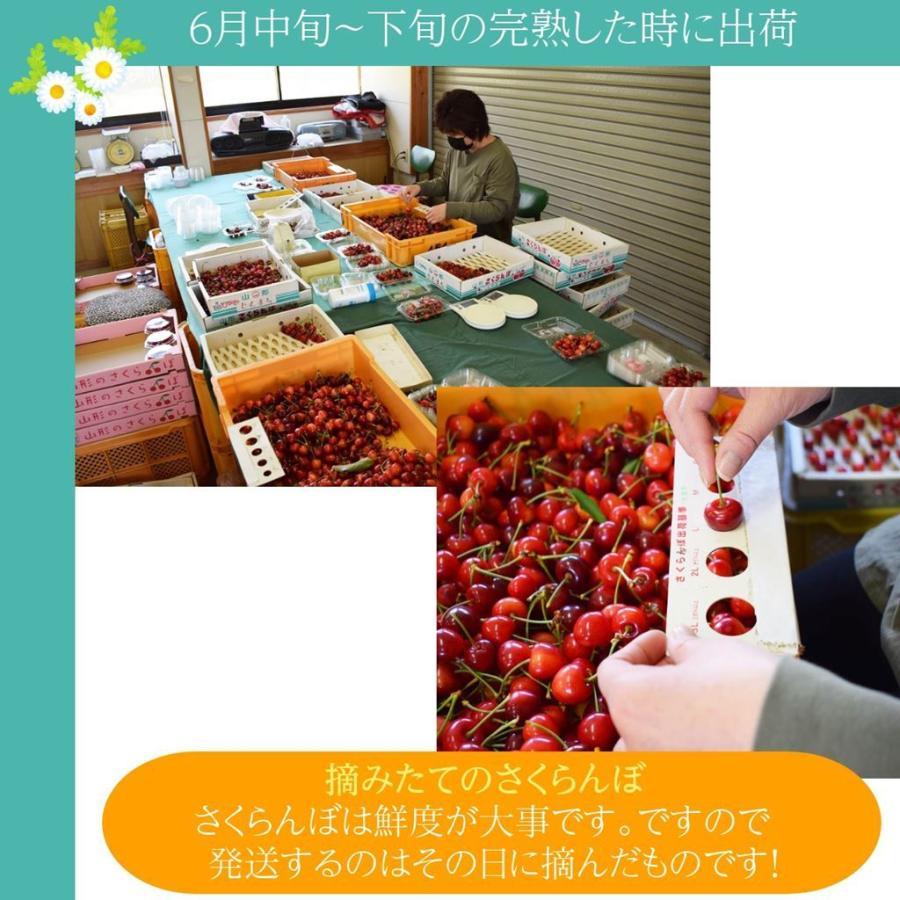 【一愛農園】佐藤錦さくらんぼ 山形県東根市 500g×2(1kg)サイズL|sweetjuicyparadise|11
