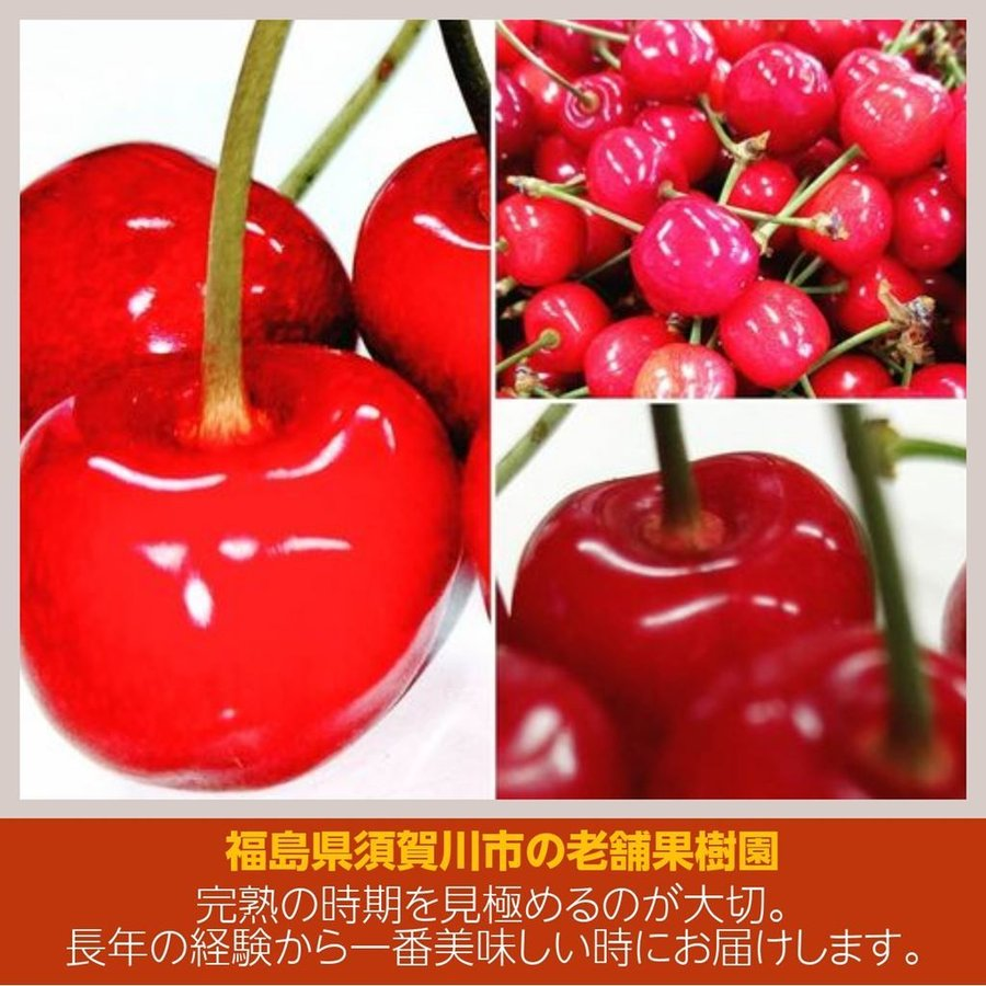 【佐藤果樹園】佐藤錦・紅さやか(紅さとう)さくらんぼ 約1kg 秀Lサイズ sweetjuicyparadise 03
