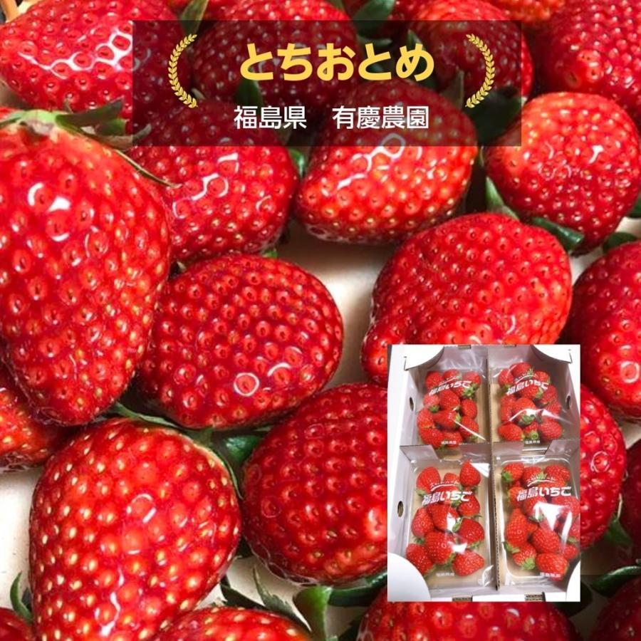 【有慶農園】 福島いちご 須賀川産 とちおとめ苺 約270gバラサイズ×4パック |sweetjuicyparadise