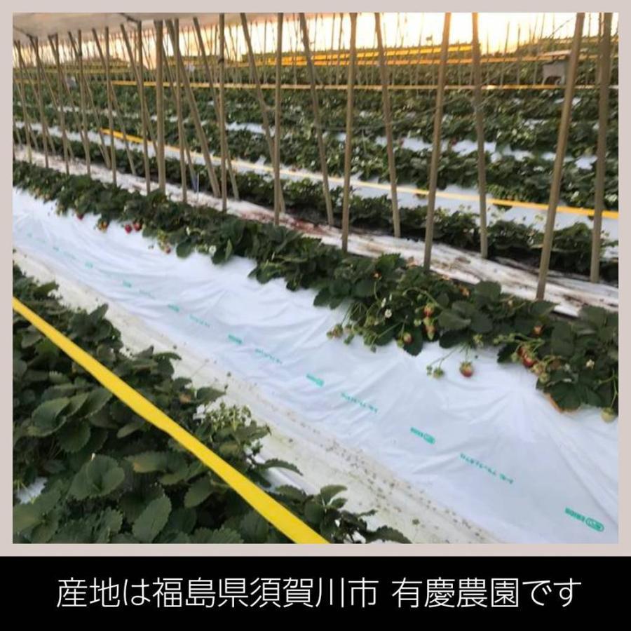 【有慶農園】 福島いちご 須賀川産 とちおとめ苺 約270gバラサイズ×4パック |sweetjuicyparadise|02