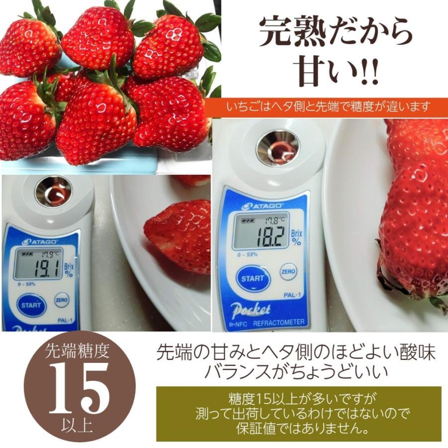 【有慶農園】 福島いちご 須賀川産 とちおとめ苺 約270gバラサイズ×4パック |sweetjuicyparadise|13