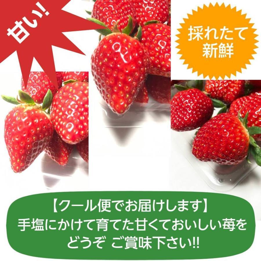 【有慶農園】 福島いちご 須賀川産 とちおとめ苺 約270gバラサイズ×4パック |sweetjuicyparadise|15