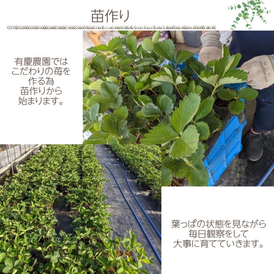 【有慶農園】 福島いちご 須賀川産 とちおとめ苺 約270gバラサイズ×4パック |sweetjuicyparadise|03