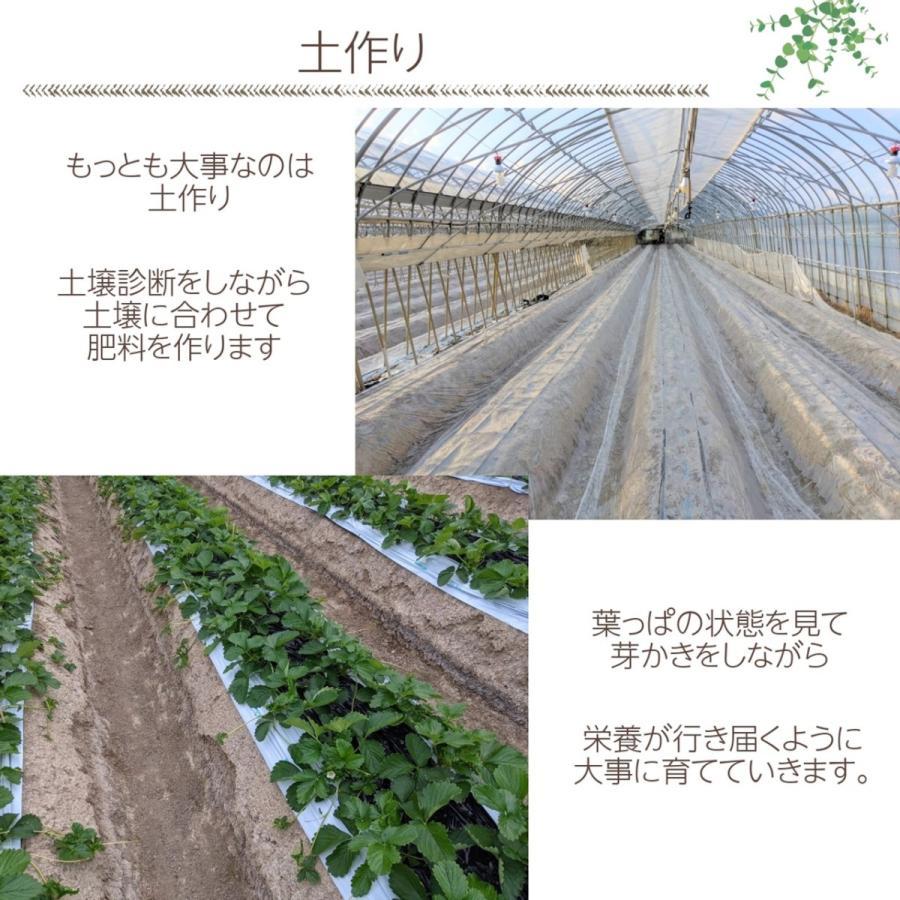 【有慶農園】 福島いちご 須賀川産 とちおとめ苺 約270gバラサイズ×4パック |sweetjuicyparadise|04