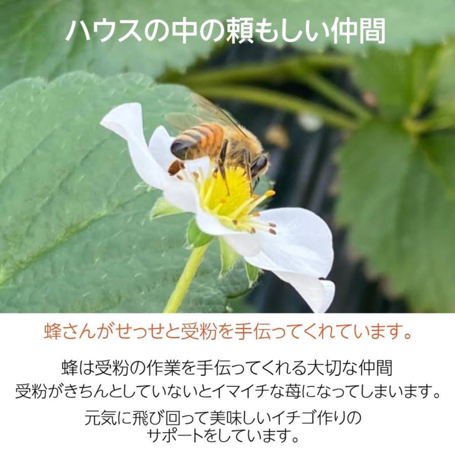 【有慶農園】 福島いちご 須賀川産 とちおとめ苺 約270gバラサイズ×4パック |sweetjuicyparadise|05