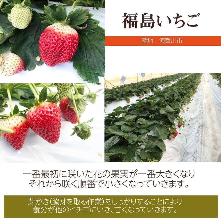 【有慶農園】 福島いちご 須賀川産 とちおとめ苺 約270gバラサイズ×4パック |sweetjuicyparadise|07