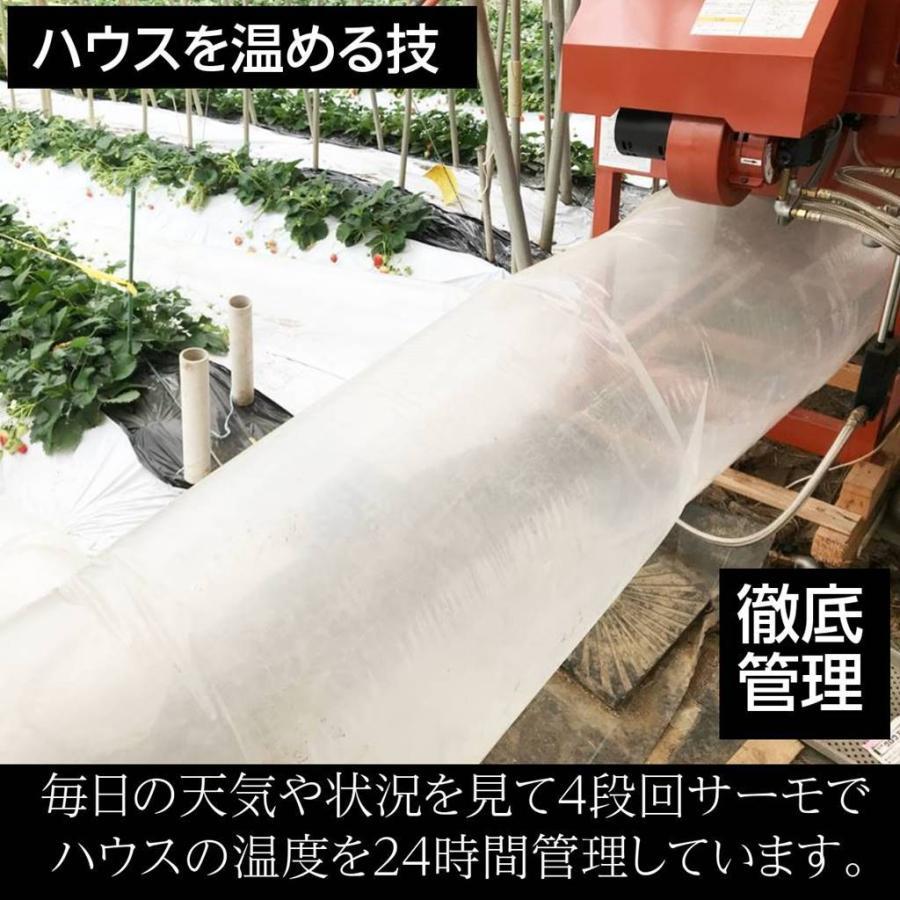 【有慶農園】 福島いちご 須賀川産 とちおとめ苺 約270gバラサイズ×4パック |sweetjuicyparadise|08