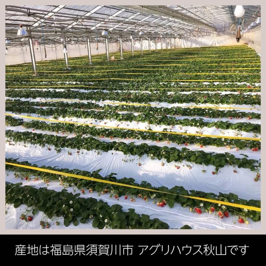 【アグリハウス秋山】福島いちご 須賀川産 とちおとめ苺 270g×4パック  sweetjuicyparadise 03