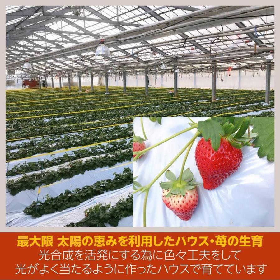 【アグリハウス秋山】福島いちご 須賀川産 とちおとめ苺 270g×4パック  sweetjuicyparadise 04