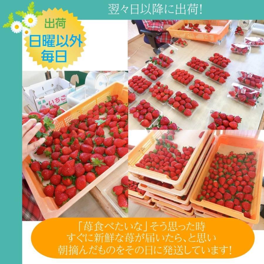 【アグリハウス秋山】福島いちご 須賀川産 とちおとめ苺 270g×4パック  sweetjuicyparadise 07