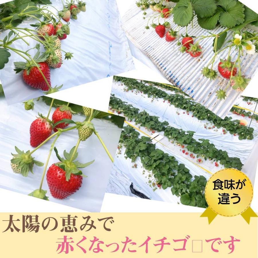【アグリハウス秋山】福島いちご 須賀川産 とちおとめ苺 270g×4パック  sweetjuicyparadise 08