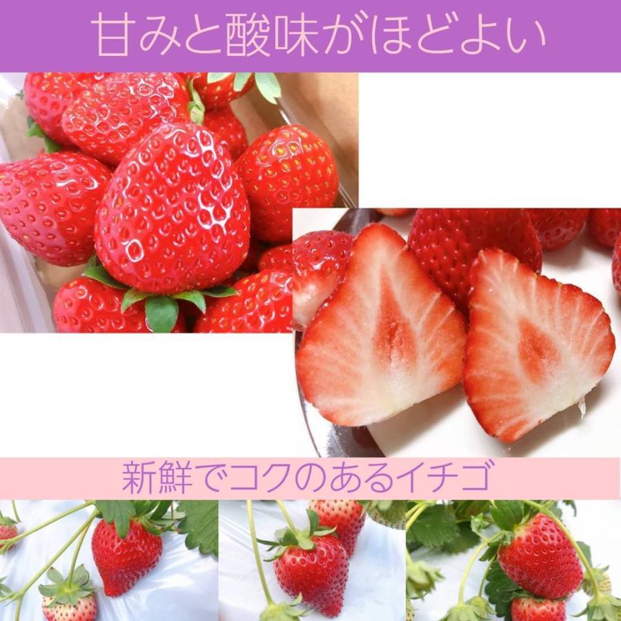 【アグリハウス秋山】福島いちご 須賀川産 とちおとめ苺 270g×4パック  sweetjuicyparadise 09