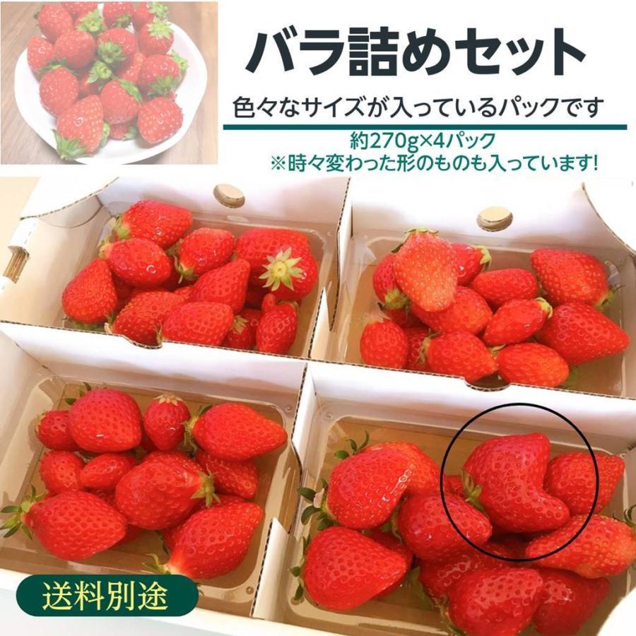 【アリガ農園】 福島いちご 須賀川市産 270g×4パック|sweetjuicyparadise|02