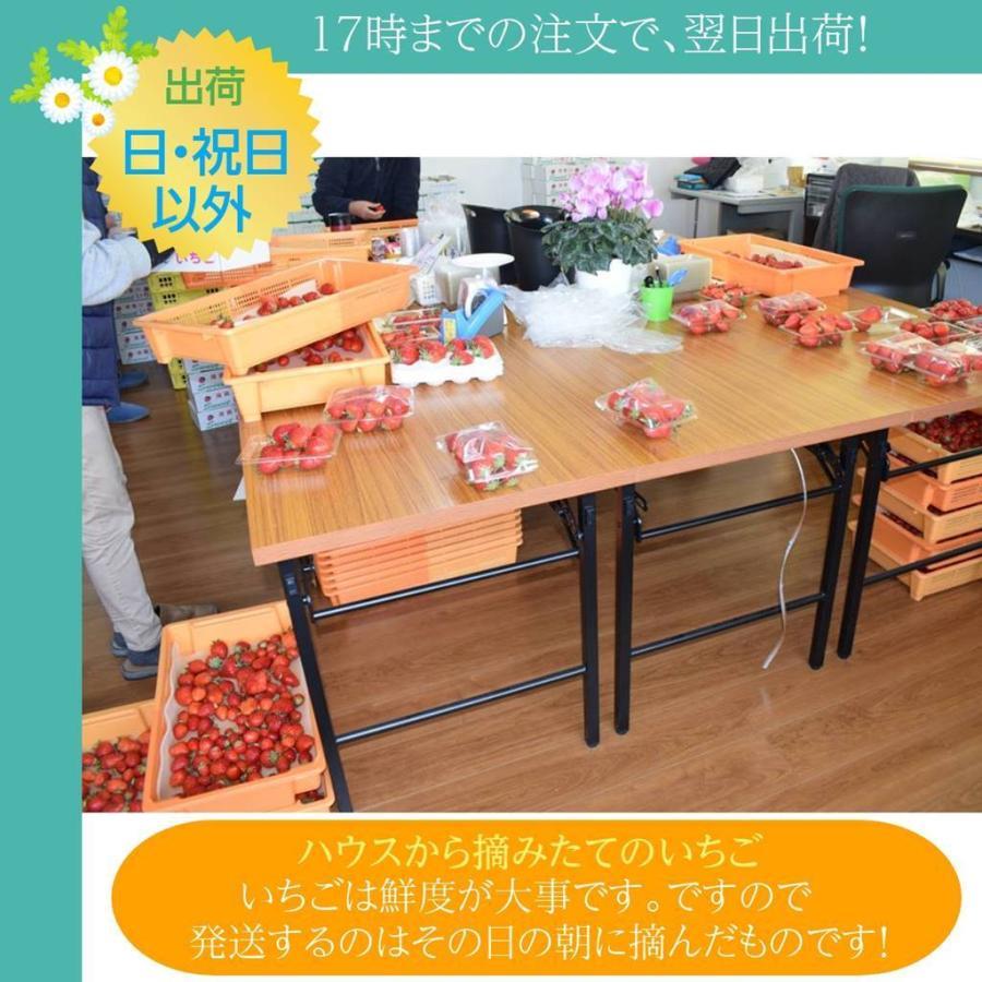 【アリガ農園】 福島いちご 須賀川市産 270g×4パック|sweetjuicyparadise|12