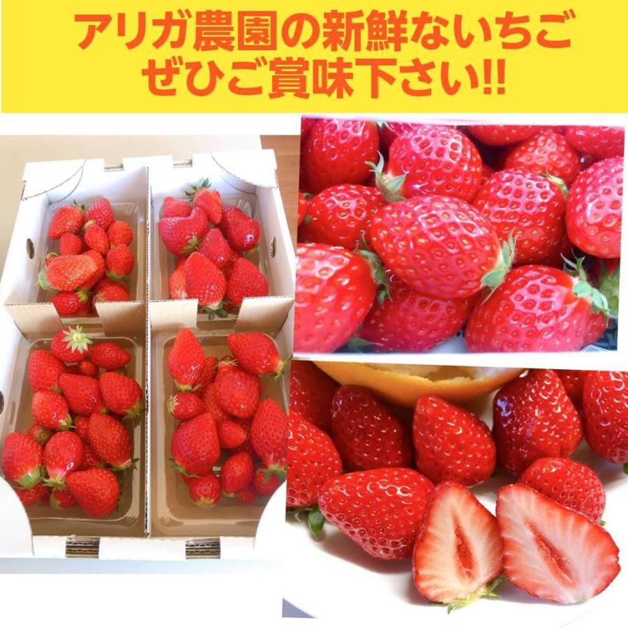 【アリガ農園】 福島いちご 須賀川市産 270g×4パック|sweetjuicyparadise|13