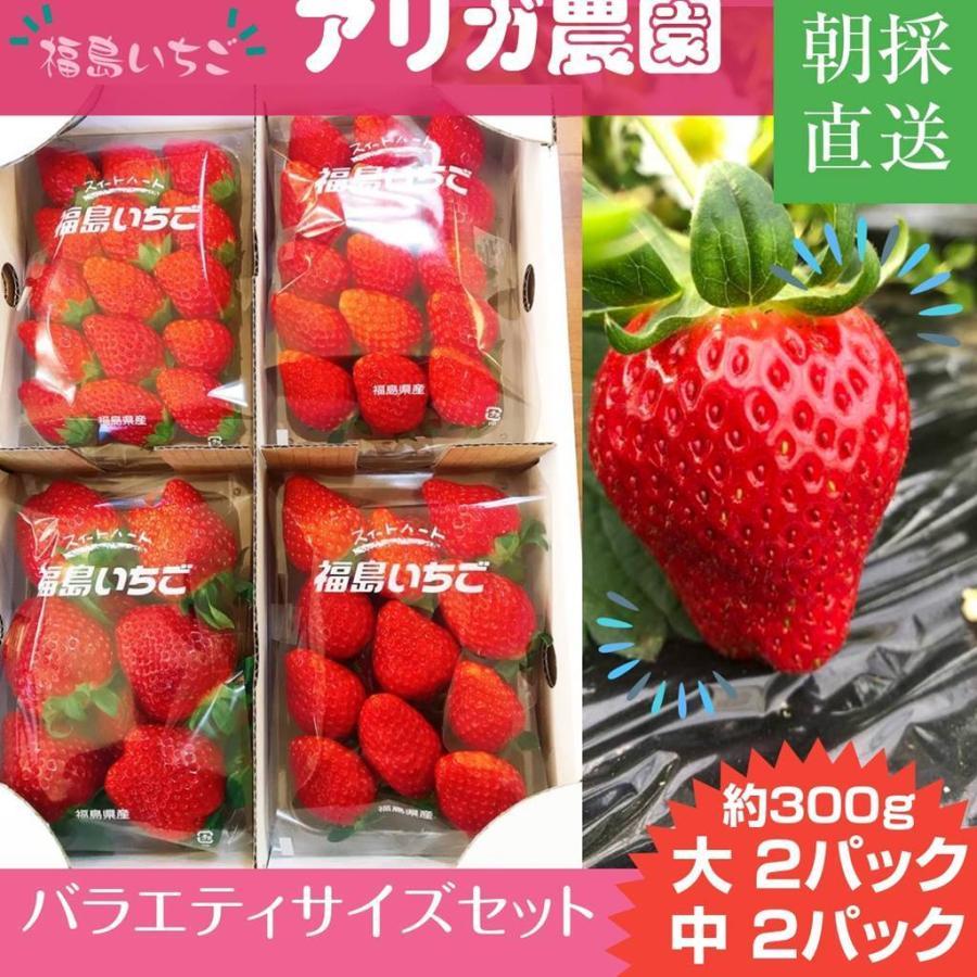 【アリガ農園】福島いちご 須賀川産 とちおとめ苺 300gサイズ大2パック 中2パック|sweetjuicyparadise