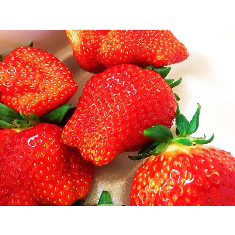 【アリガ農園】福島いちご 須賀川産 とちおとめ苺 300gサイズ大2パック 中2パック|sweetjuicyparadise|11