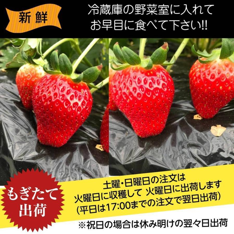 【アリガ農園】福島いちご 須賀川産 とちおとめ苺 300gサイズ大2パック 中2パック|sweetjuicyparadise|13