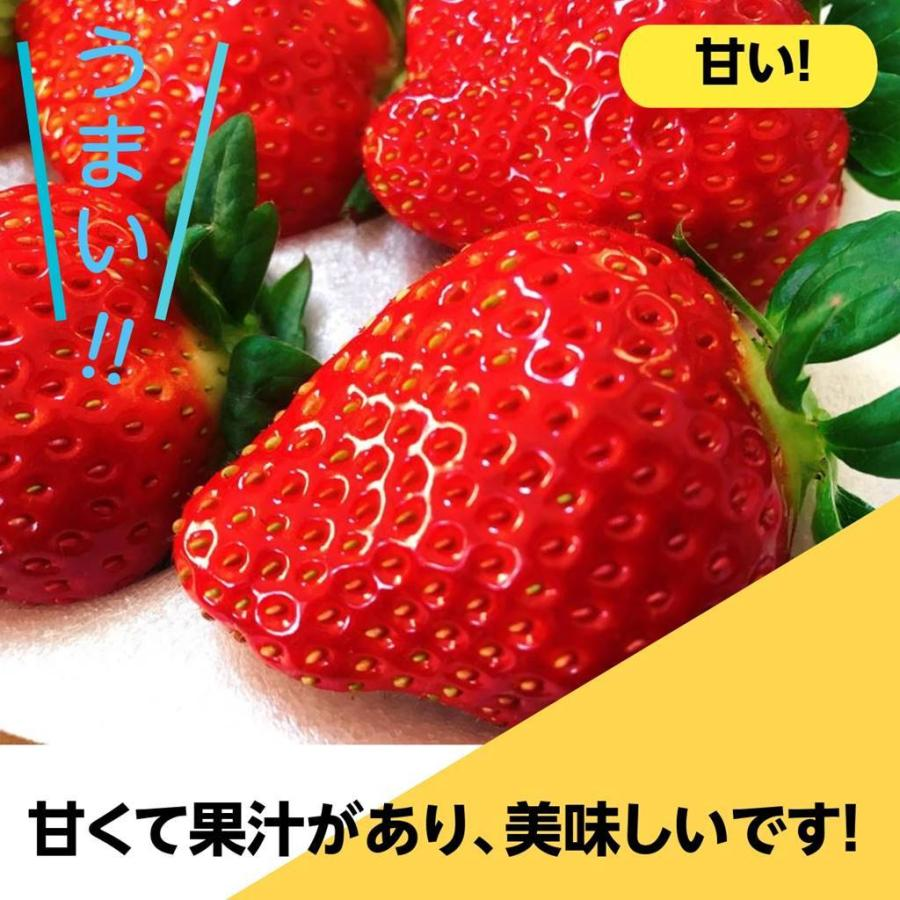 【アリガ農園】福島いちご 須賀川産 とちおとめ苺 300gサイズ大2パック 中2パック|sweetjuicyparadise|18