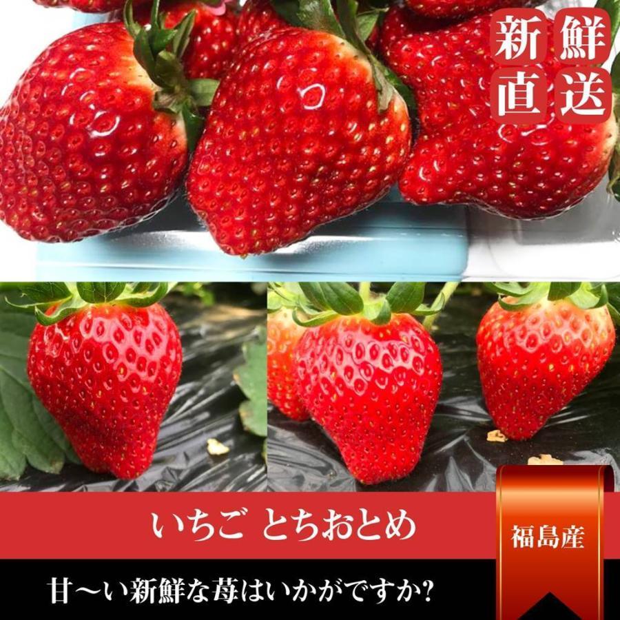 【アリガ農園】福島いちご 須賀川産 とちおとめ苺 300gサイズ大2パック 中2パック|sweetjuicyparadise|19