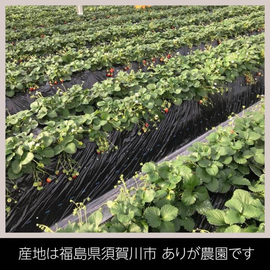 【アリガ農園】福島いちご 須賀川産 とちおとめ苺 300gサイズ大2パック 中2パック|sweetjuicyparadise|04