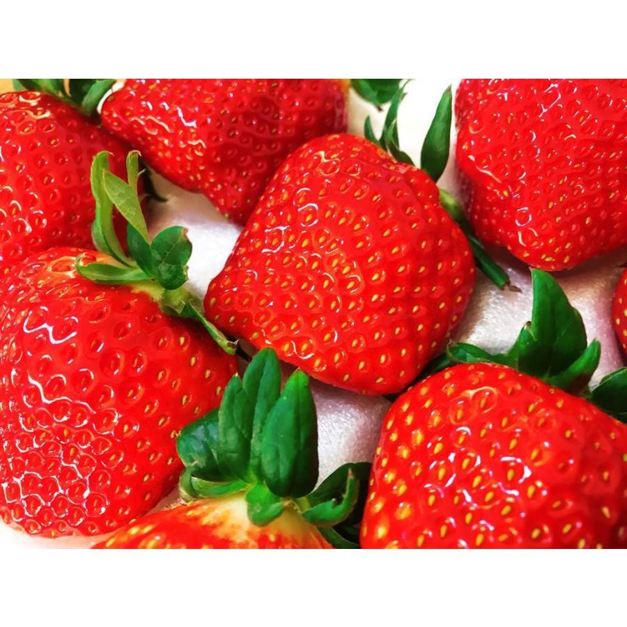【アリガ農園】福島いちご 須賀川産 とちおとめ苺 300gサイズ大2パック 中2パック|sweetjuicyparadise|07
