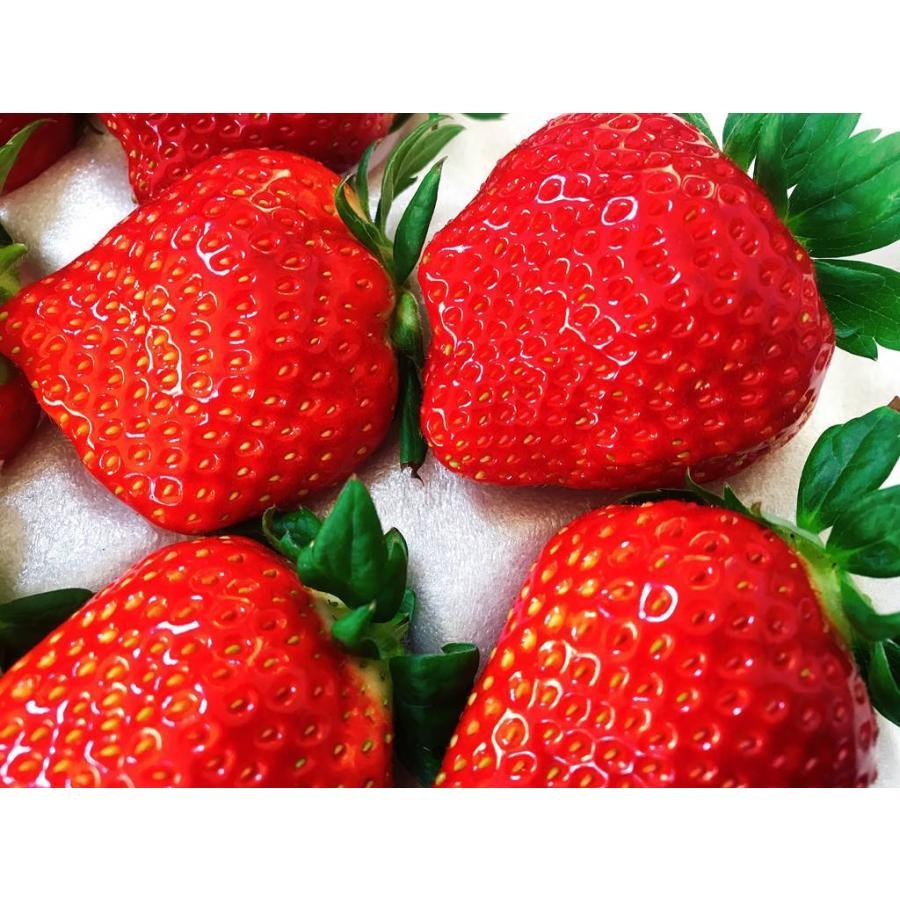 【アリガ農園】福島いちご 須賀川産 とちおとめ苺 300gサイズ大2パック 中2パック|sweetjuicyparadise|10