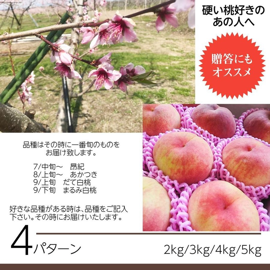 【箭内巌雄果樹園】桃 3kg 品種おまかせ 贈答・ギフトにも|sweetjuicyparadise|03