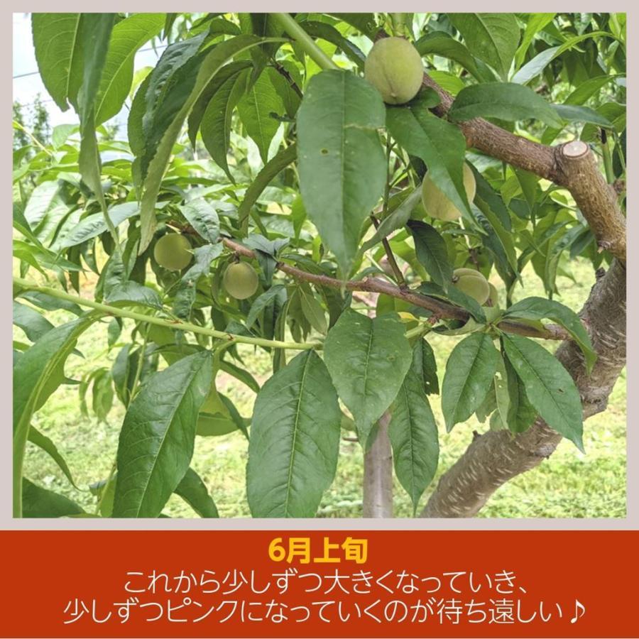 【箭内巌雄果樹園】桃 4kg 品種おまかせ 贈答・ギフトにも sweetjuicyparadise 04