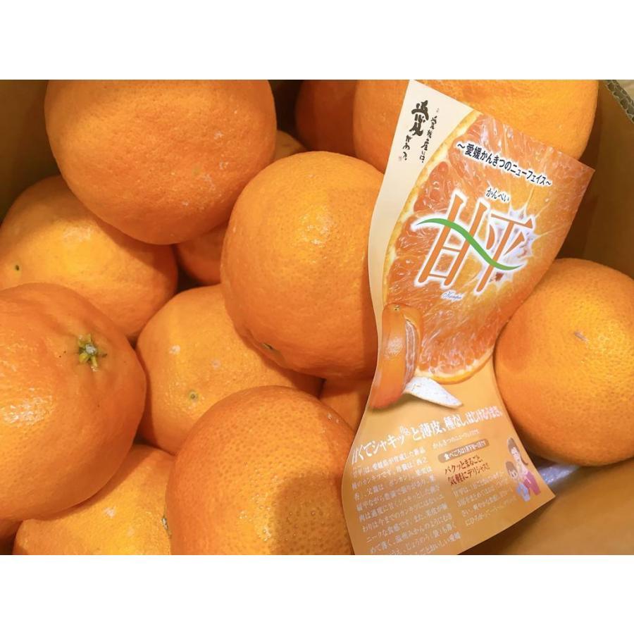 果物フルーツ詰め合わせ デトックスセットA|sweetjuicyparadise|08