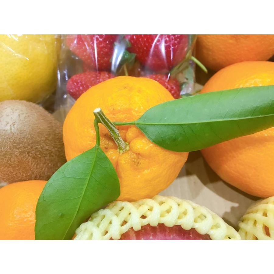 果物フルーツ詰め合わせ デトックスセットA|sweetjuicyparadise|09