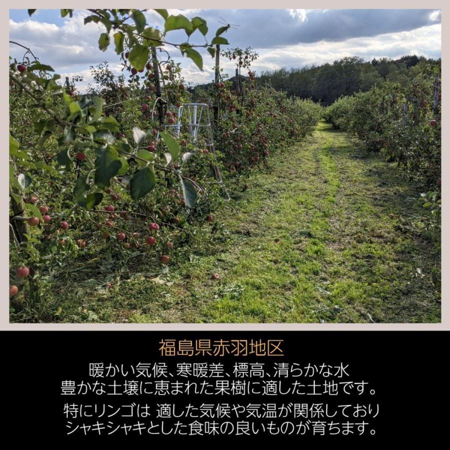 【訳あり】福島県 長田果樹園 りんご 小さいサイズ約5kg サンふじ|sweetjuicyparadise|11