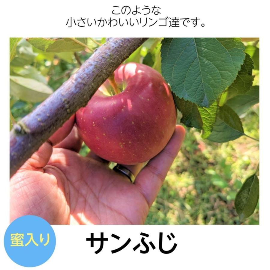 【訳あり】福島県 長田果樹園 りんご 小さいサイズ約5kg サンふじ|sweetjuicyparadise|13