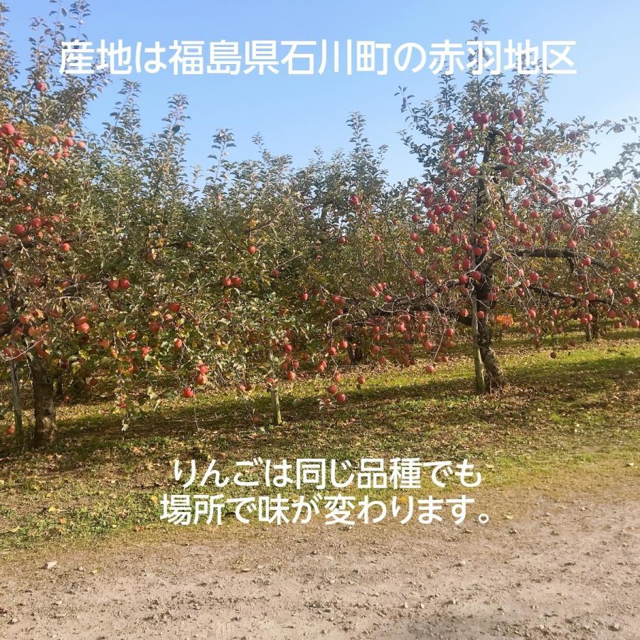 【訳あり】福島県 長田果樹園 りんご 小さいサイズ約5kg サンふじ|sweetjuicyparadise|06