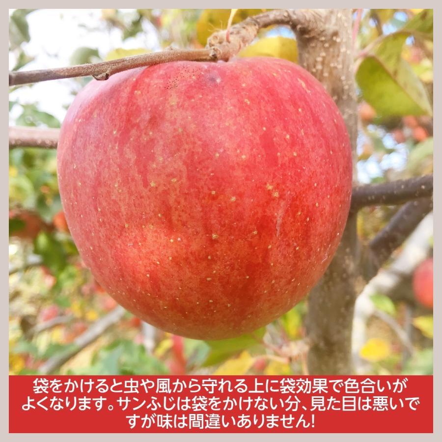 【訳あり】福島県 長田果樹園 りんご 小さいサイズ約5kg サンふじ|sweetjuicyparadise|07