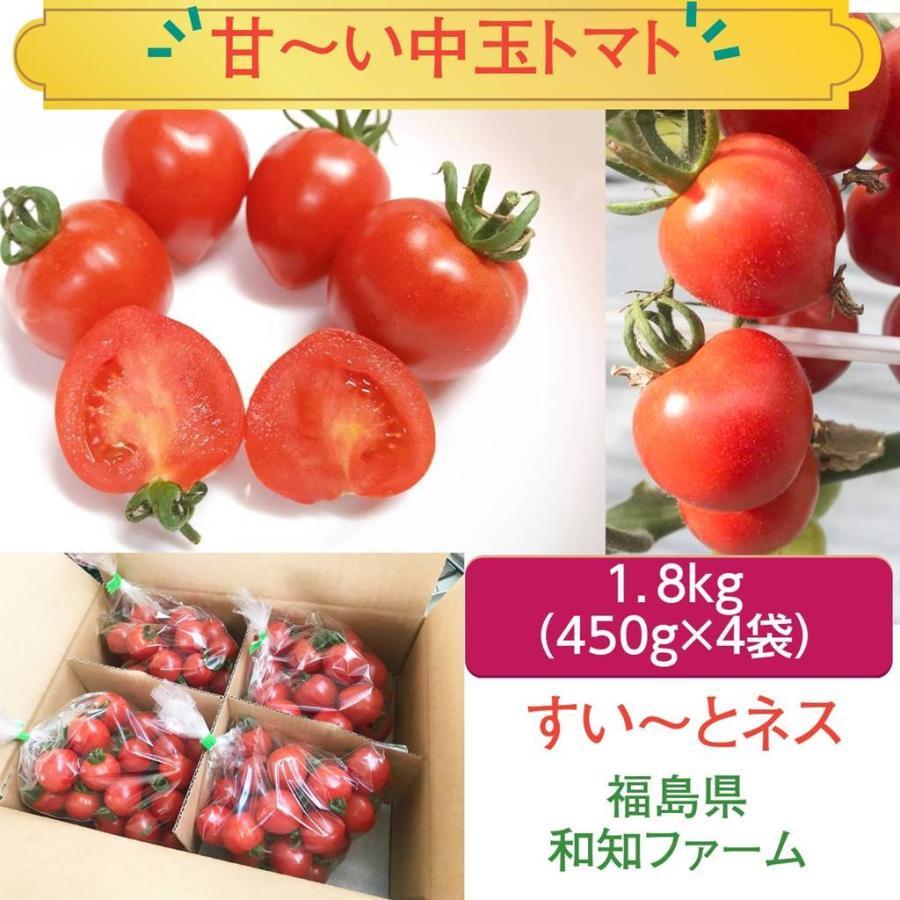 和知ファーム 福島 中玉トマト 1.8kg 白河産|sweetjuicyparadise