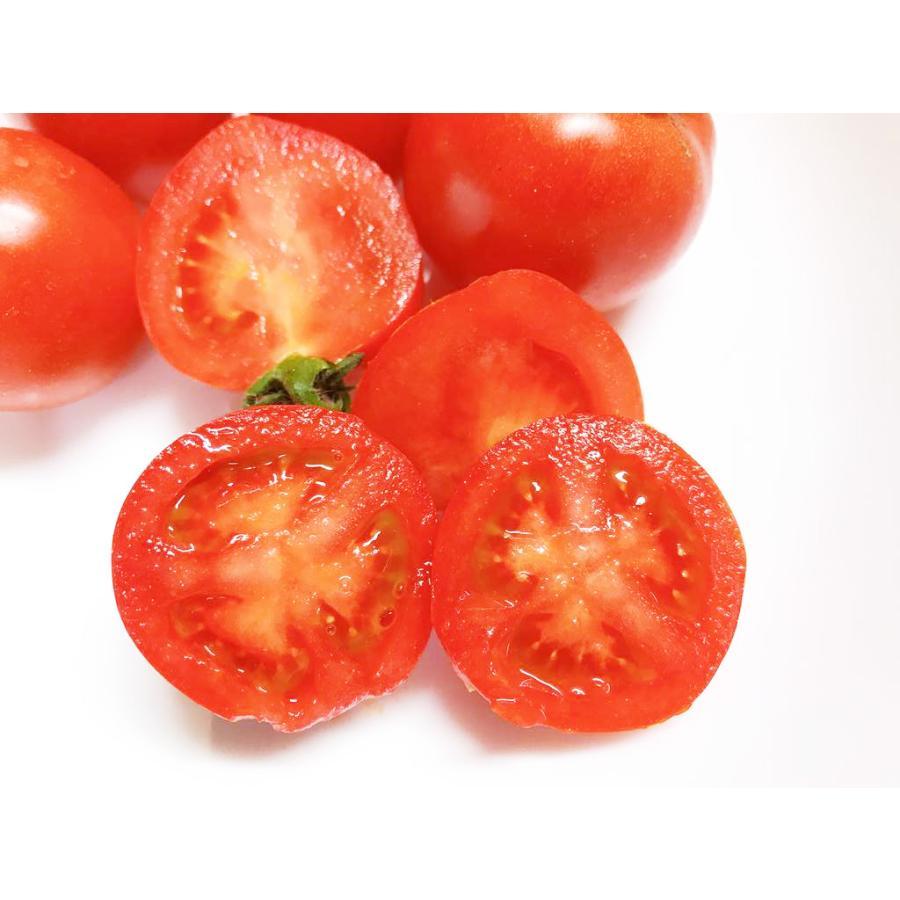 和知ファーム 福島 中玉トマト 1.8kg 白河産|sweetjuicyparadise|02