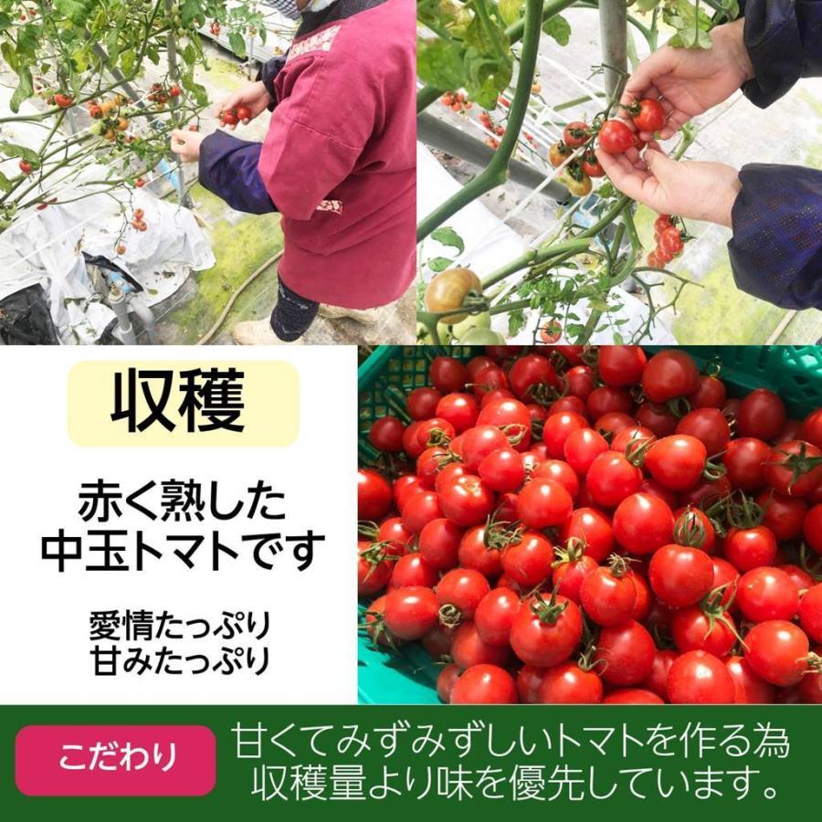 和知ファーム 福島 中玉トマト 1.8kg 白河産|sweetjuicyparadise|13