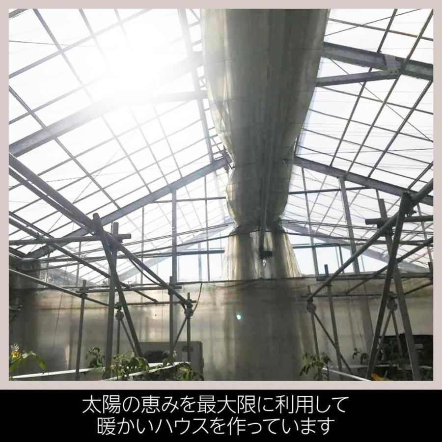 和知ファーム 福島 中玉トマト 1.8kg 白河産|sweetjuicyparadise|14
