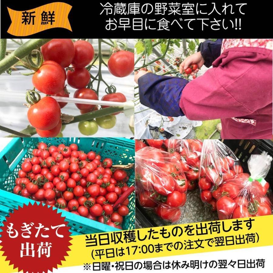 和知ファーム 福島 中玉トマト 1.8kg 白河産|sweetjuicyparadise|15