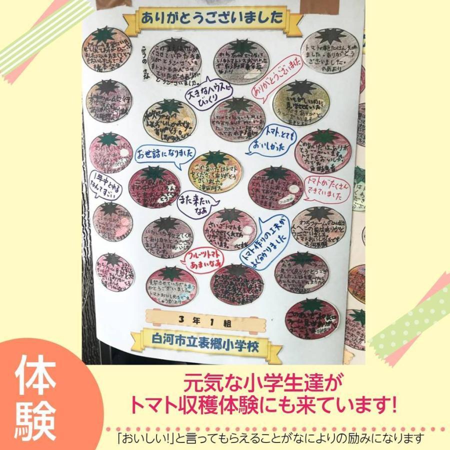 和知ファーム 福島 中玉トマト 1.8kg 白河産|sweetjuicyparadise|16
