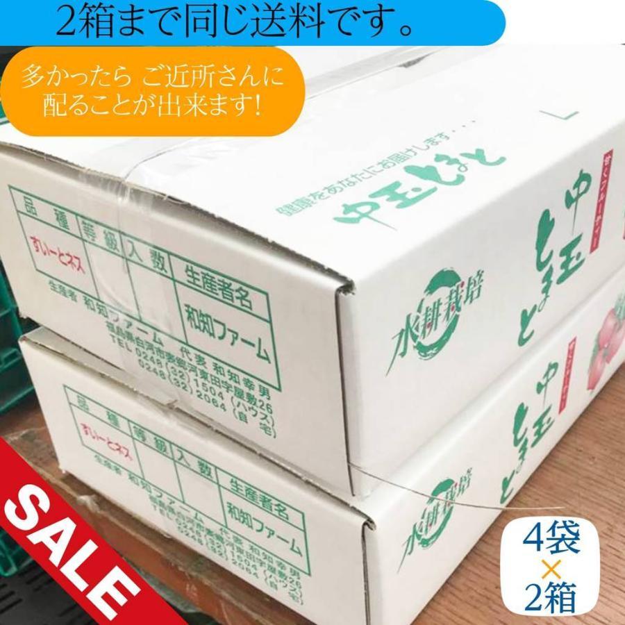 和知ファーム 福島 中玉トマト 1.8kg 白河産|sweetjuicyparadise|17