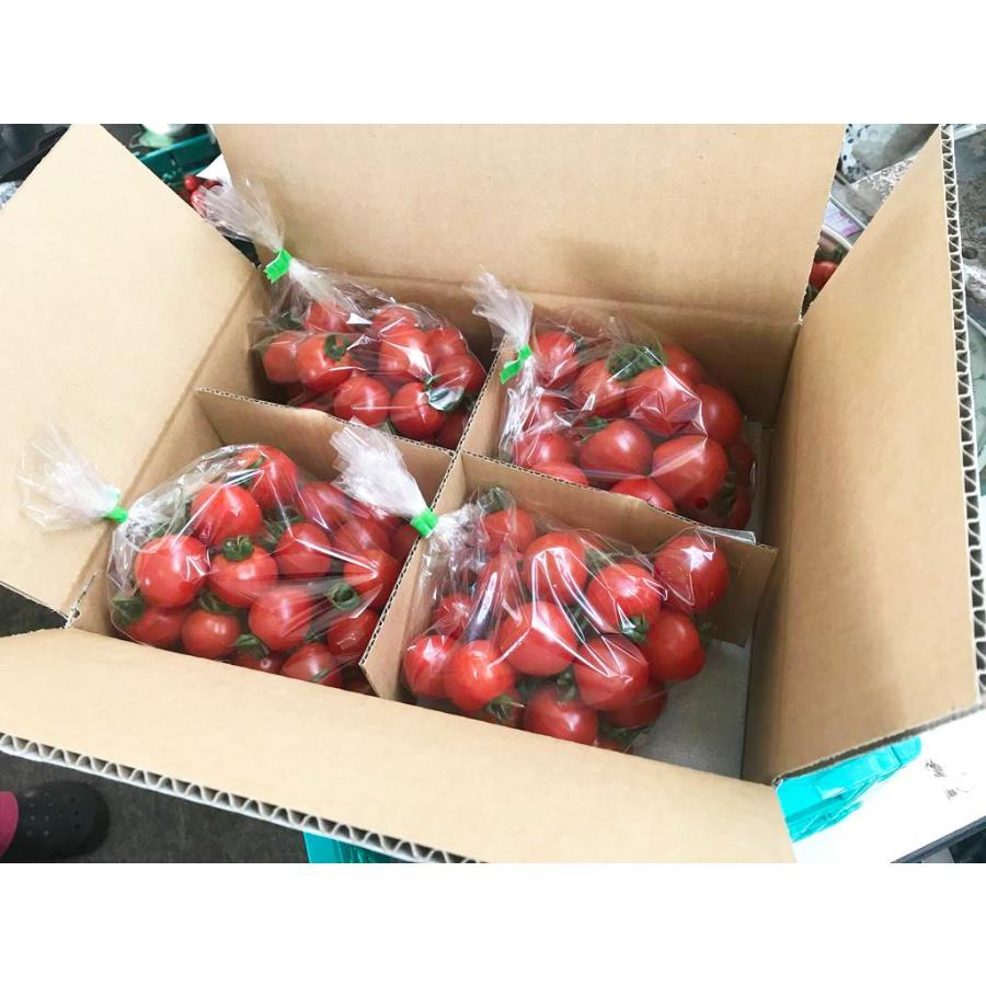和知ファーム 福島 中玉トマト 1.8kg 白河産|sweetjuicyparadise|03