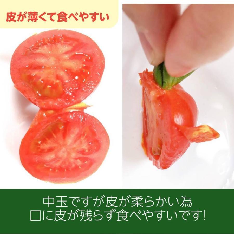 和知ファーム 福島 中玉トマト 1.8kg 白河産|sweetjuicyparadise|05